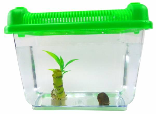 Aquarium Set Posthorn Wasser Schnecke schwarz mit Futter, Pflanze und Aquarium Kinder Erwachsene Aqua Snail Plant Einsteiger Starter Set (1Stk schwarz) 4792