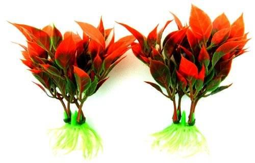 Pflanze 4079 Aquarium Pflanzen Set Terrarium Deko Wasserpflanzen tiefrot 8cm auf Stein PF116