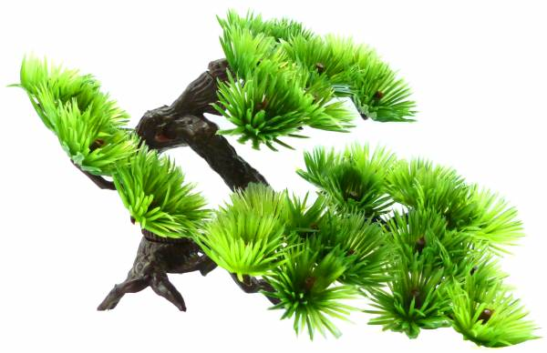Pflanze Aquariumpflanze Wasserpflanze Dekoration grün Terrarium Pflanzen Bonsai Baum XS 4817