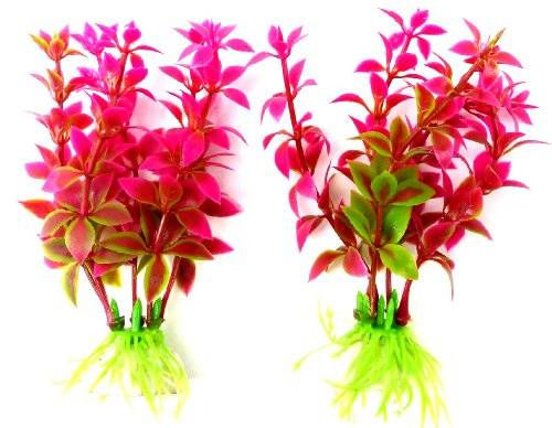 Pflanze 2909 Aquarium Pflanzen 2Stk Terrarium Water Plants pink 8cm auf Stein PF120