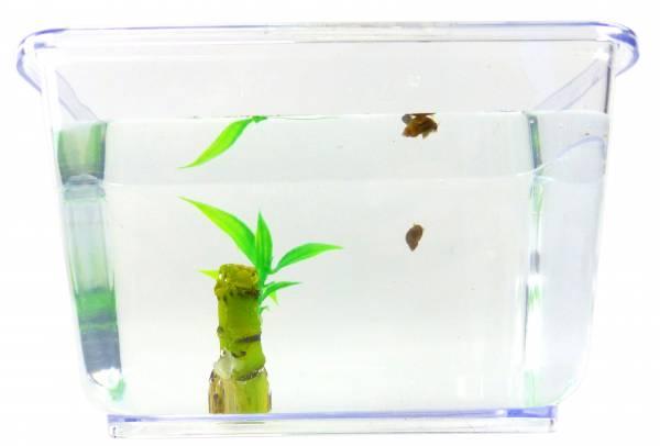 Aquarium Schnecke im Set Posthorn Wasser Schnecke braun mit Pflanze und Aquarium GRÜN Kinder Erwachsene Aqua Snail Plant Einsteiger Starter Set (2Stk mini Teufel?) 4798