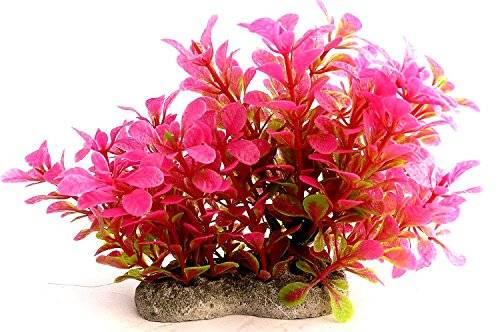 Aquarium-Pflanze 2461 Terrarium-Hintergrund Wasserpflanze 12cm auf Stein PF63