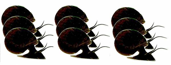 Schnecken-Set Laub-Fresser 9x Teich-Schnecke Suesswasser Schnecken 3x 3Stk Posthorn-Schnecken braun/schwarz1 ca 1-4cm 5141